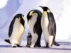 pinguin_story
